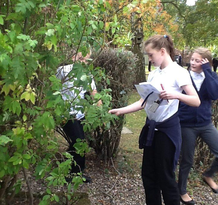 Classifying plants in the school garden.